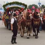 okt-horses